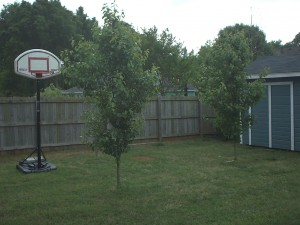 The backyard 'before'