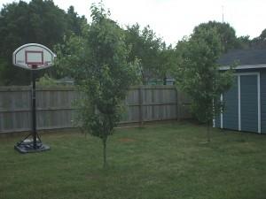 The backyard 'before'